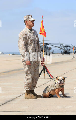 U.S. Marine and the official mascot for Marine Corps Air Station Miramar. - Stock Photo