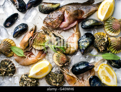 Fresh seafood with herbs and lemon on ice. Prawns, fish, mussels and scallops over steel metal background. - Stock Photo