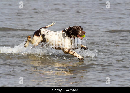Southport, Merseyside, UK. , . UK Weather: The warm weather brings dog owners to play with their pets on the beach - Stock Photo