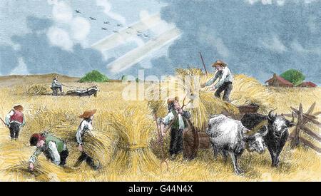 Europe. Harvesting. Engraving. 19th century. - Stock Photo