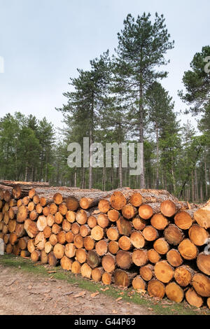 Stack of logs in The New Forest National Park - Stock Photo