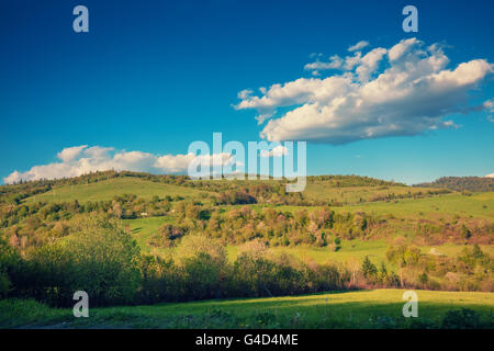 Olive groves on the hills. Tuscany, Italy - Stock Photo