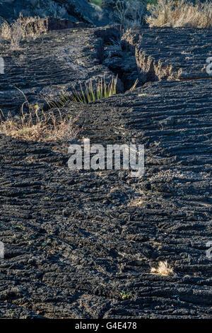 Pahoehoe lava field, Carrizozo Malpais lava flow at Valley of Fires Recreation Area, Tularosa Basin near Carrizozo, - Stock Photo