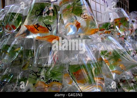 A school of gold fish in bags waiting to be sold at Hong Kong's street market. - Stock Photo