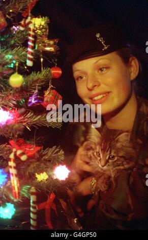 DEFENCE Kitten - Stock Photo
