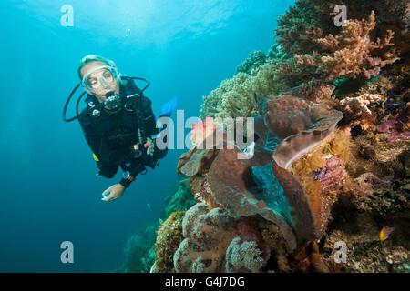 Diver and Giant Clam, Tridacna squamosa, Raja Ampat, West Papua, Indonesia - Stock Photo