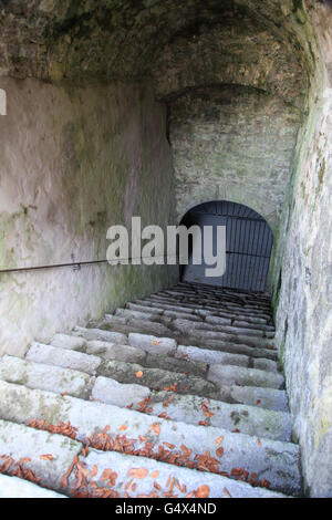 Stairs leading in an old cellar - Stock Photo
