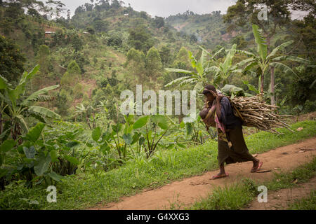 A woman carries firewood down a rural village lane in the foothills of the Rwenzori Mountains on the DRC / Uganda - Stock Photo