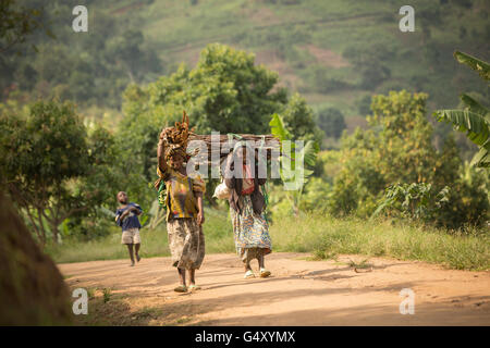 Women carry firewood down a rural village lane in the foothills of the Rwenzori Mountains on the DRC / Uganda border. - Stock Photo