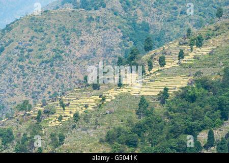 Nepal, Western Region, Gandaki, On the Annapurna Circuit - Day 1 - From Bhulbhule to Jagat - Grain terraces at Gandaki - Stock Photo