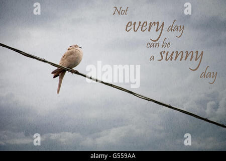 Truism. Wet bird on telephone wire. Bad weather life concept. - Stock Photo