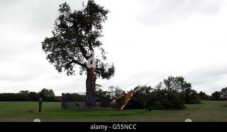 Gales storm damage Shropshire - Stock Photo