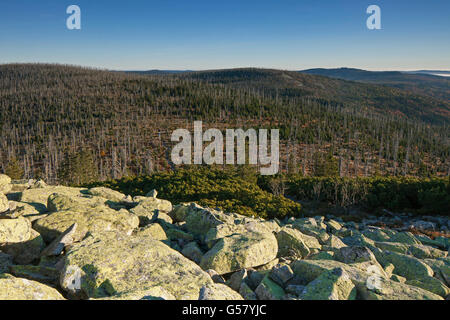 View from Mt Lusen over woodland with dead trees killed by bark beetles in the Bavarian Forest National Park, Bavaria, - Stock Photo