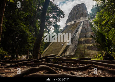A man cleans the steps of the Temple 5 in the lost world of Guatemala's Mayan Ruins in the jungle of Tikal National - Stock Photo