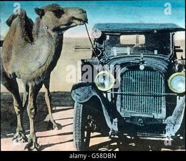 Außergewöhnlich: ein Kamel ist an einem Auto angebunden. Trip to China, camel and oldtimer, history, historical, - Stock Photo