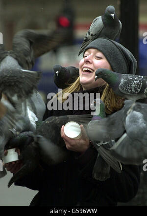 Feeding the pigeons - Stock Photo