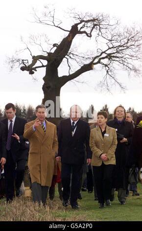 Prince Charles civil war tree - Stock Photo