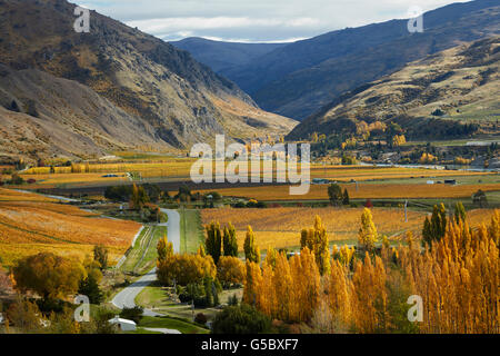 Autumn Colours, Felton Road, Bannockburn, near Cromwell, and Kawarau Gorge, Central Otago, South Island, New Zealand - Stock Photo