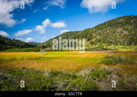 View of hills at Rancho Del Oso -  Big Basin Redwoods State Park, in California. - Stock Photo