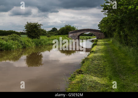 Seen along the Shropshire Union Canal (main line) in Cheshire. - Stock Photo
