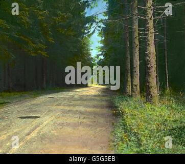 Ein schattiger Waldweg nahe Elbingerode im Harz. A shady way path through the forest near Elbingerode in the Harz - Stock Photo