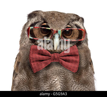 Close-up of a Verreaux's eagle-owl - Bubo lacteus (3 years old) wearing glasses and a bow tie in front of a white - Stock Photo