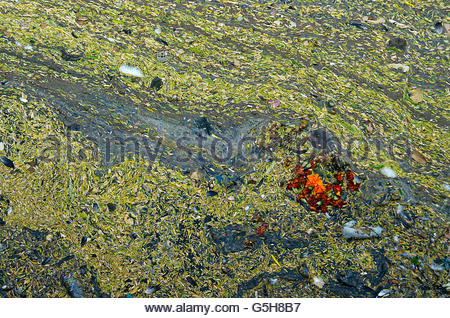 Flowers Floating in Dirty Water - Stock Photo