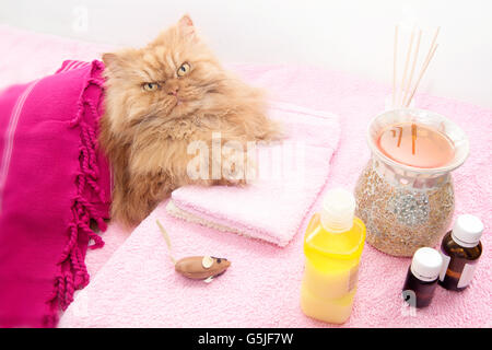 High Angle View Of Persian cat  Resting On Towel - Stock Photo