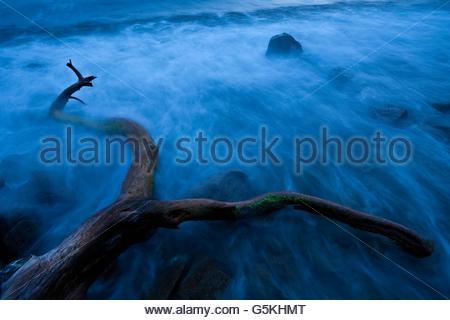 Dead tree on a beach shrouded in mist in Italy - Stock Photo