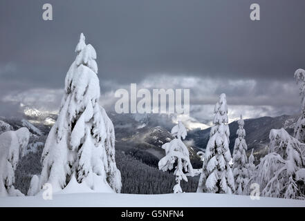 WASHINGTON - Snow covered trees on Amabilis Mountain overlooking the Kachess River Valley near Snoqualmie Pass. - Stock Photo