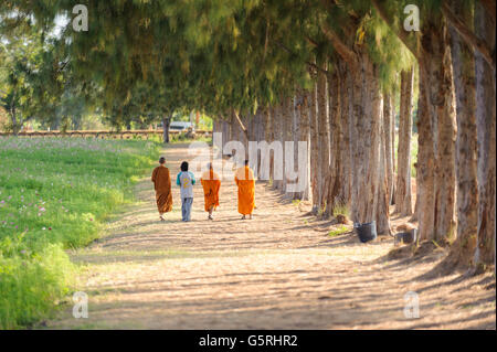 Buddhist monk travel pine forest in Thailand - Stock Photo