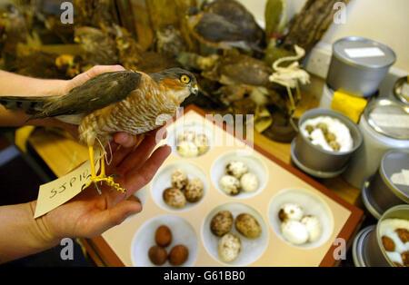 Carlton D'Cruze - Egg Collection - Stock Photo