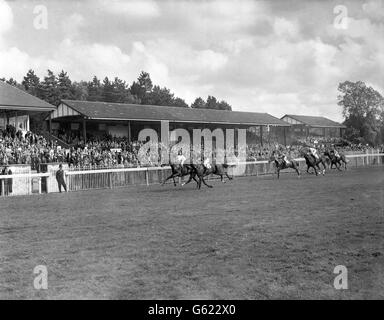 Horse Racing - Hever Stakes - Lingfield Park Racecourse - Stock Photo