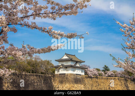Cherry blossoms during spring in Osaka Castle - Stock Photo