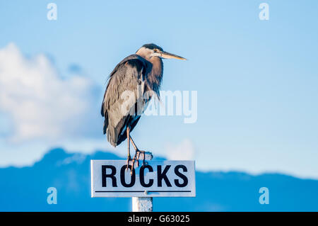 Heron on Rocks sign - Stock Photo