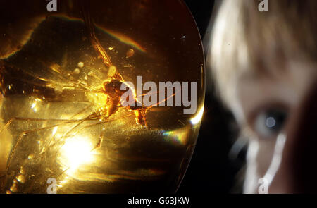 Amber Exhibition in Edinburgh - Stock Photo