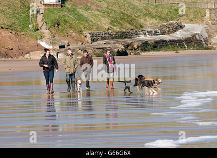 dog walk walker walkers group of people walking dogs on beach sea seaside run running playing - Stock Photo