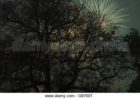 Trees silhouetted against a firework display - Stock Photo