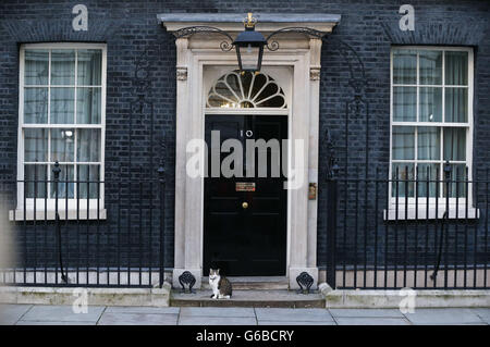 London, UK. 24th June, 2016. Larry the cat is seen outside 10 Downing Street in London, Britain on June 24, 2016. - Stock Photo