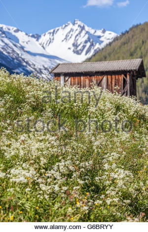 Summer meadow in Riva di Tures, South Tyrol, Italy - Stock Photo
