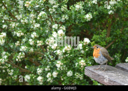 Bird sitting on a table in the nature. - Stock Photo
