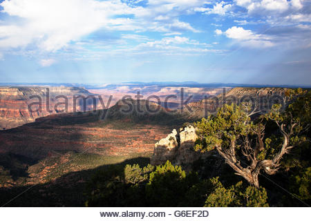 View from Crazy Jug Point North Rim Grand Canyon National Park Arizona - Stock Photo