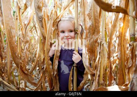 Little girl in cornfield, portrait - Stock Photo