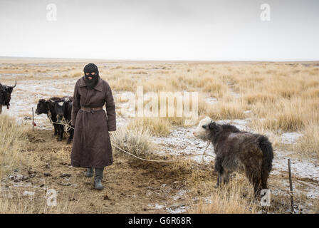 Nomad Man with young yak in a cold morning in Western Mongolia - Stock Photo