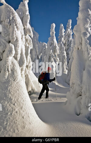 WASHINGTON - Cross-country skiing around snow plastered trees near the summit of Amabile Mountain near Snoqualmie - Stock Photo