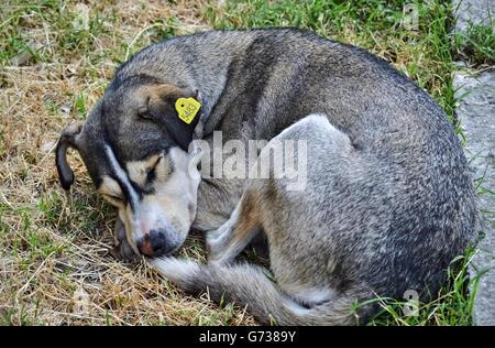 Homeless cute dog sleeping in the grass beside the street - Stock Photo