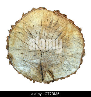 sawed tree cut isolated on a white background - Stock Photo