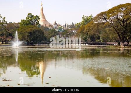In Yangon, the central stupa of the Paya Shwedagon reflecting on the calm and glassy water of Lake Kandawgyi (Myanmar). - Stock Photo