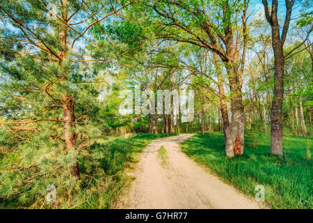 Beautiful Summer Green Forest. Countryside Road, Path, Way, Lane, Pathway On Sunny Day In Spring Forest. - Stock Photo