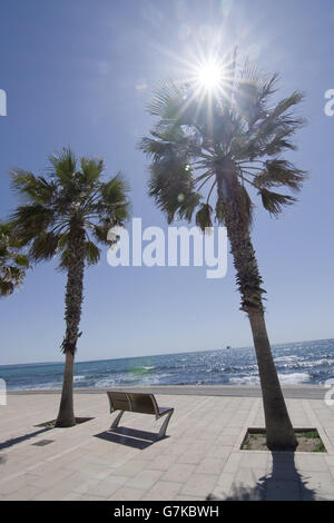 Radiant sunshine, palms and seaside bench in Palma de Mallorca, Spain in April. - Stock Photo